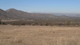 Место обитания дегу. Поля Чили.